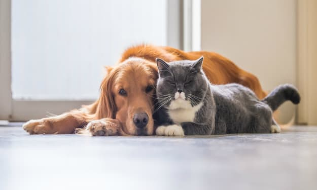Pet Friendly Flooring Ideas for a Your Sweet Home | Its Pros and Cons
