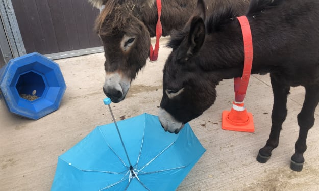 Taking Care of Your Donkeys' Mental Wellbeing