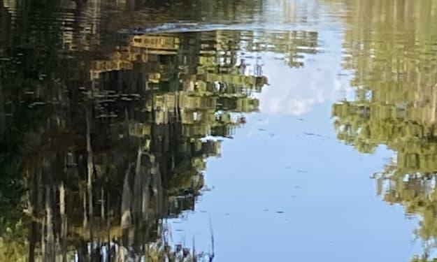Frozen in a pond