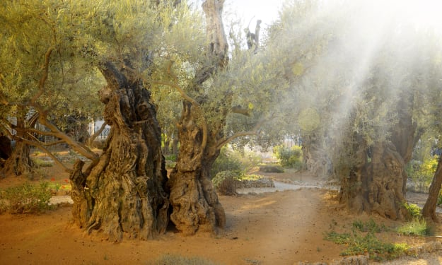 From Beneath the Olive Tree