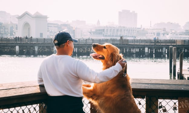 Consider these points before having a golden retriever