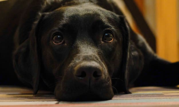 Dog Etiquette: How to Be a Conscientious Dog-Owning Neighbor