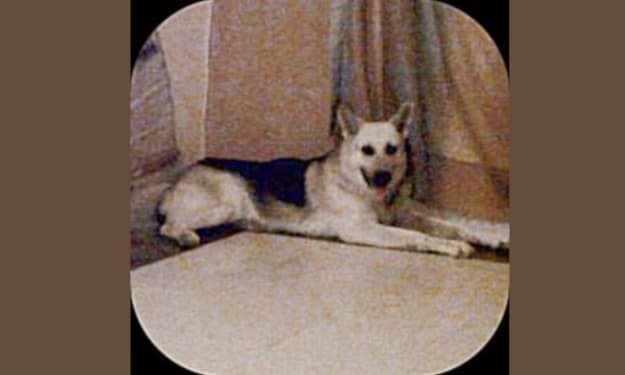 The Life and Death of Rocko: My wonder dog