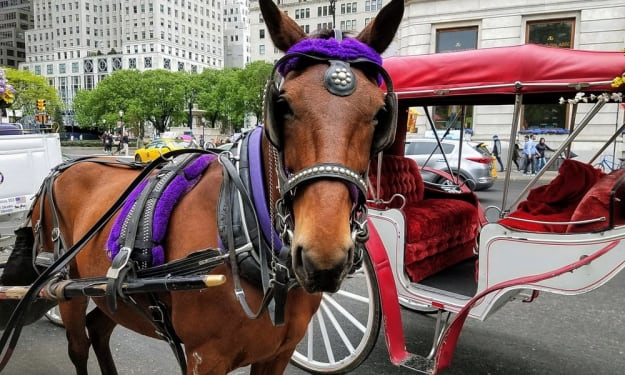4 Distinguishable Benefits To Going For A Carriage Ride In Central Park