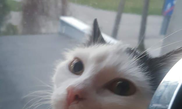 My pet Kai