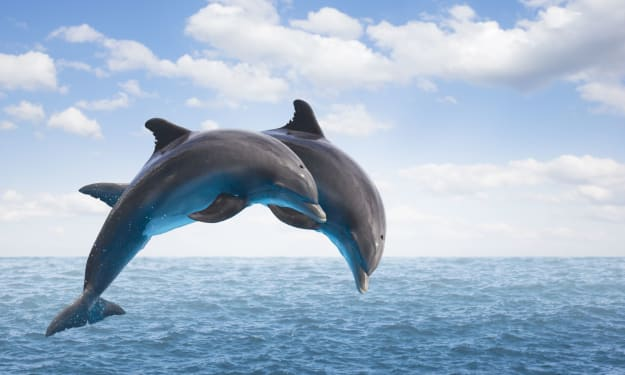 Engaging Facts About Dolphins