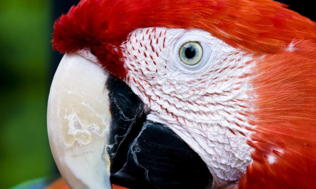 Italians, Disney World, and The Scarlet Macaw