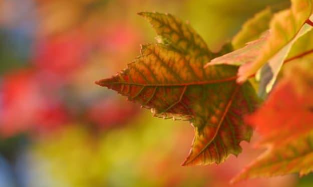 5 Ways to Celebrate the Autumn Equinox This Year
