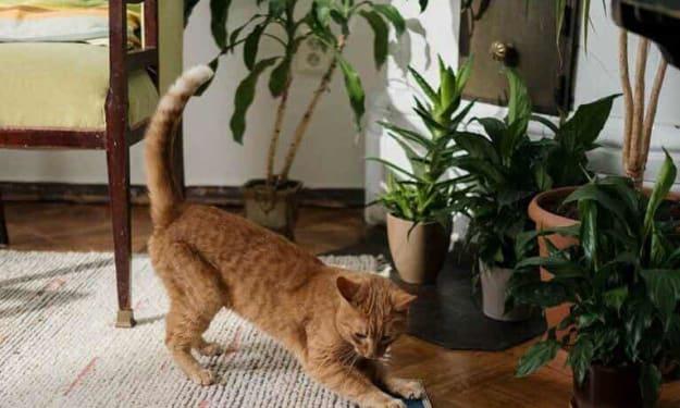 10 pet friendly indoor plants
