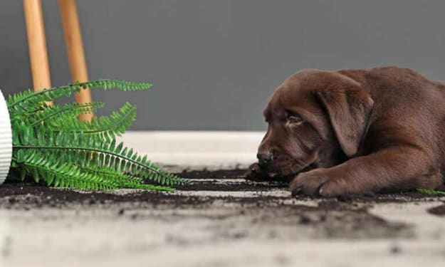 Toxic houseplants for your pets