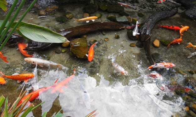 Making a Fishpond