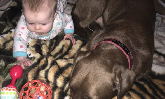 Pets After Babies