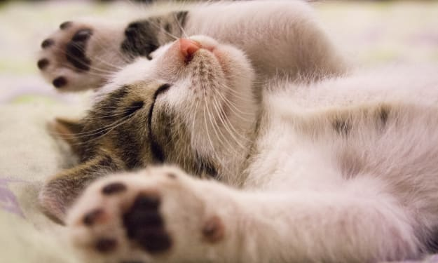 8 Reasons Why You Need a Cat (or Cats) in Your Life