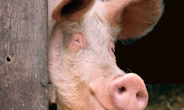 The True Confessions of Rascal the Pig
