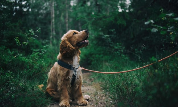 Summer Dangers for Pets