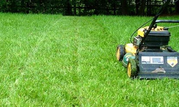 Tips for Summer Yard Maintenance