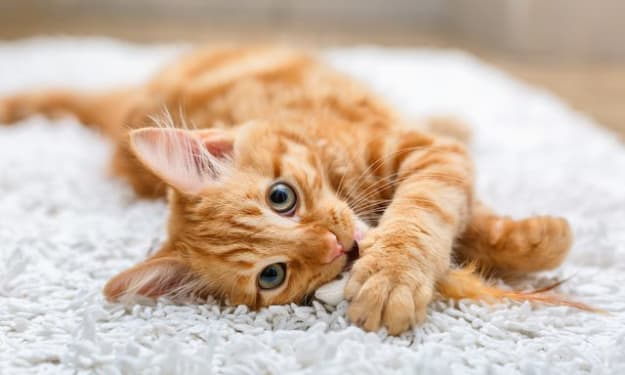 5 Things I've Learned About Having a Cat