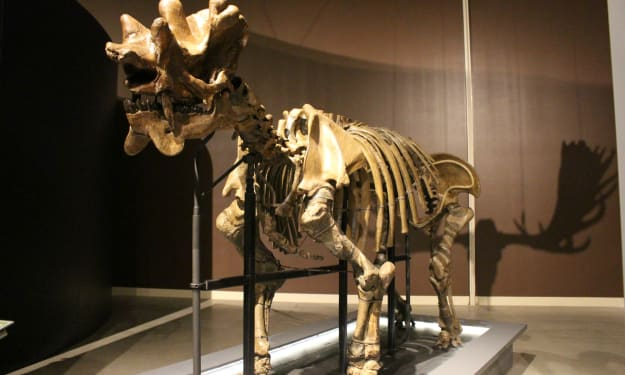 The Dead Zoo: Uintatherium