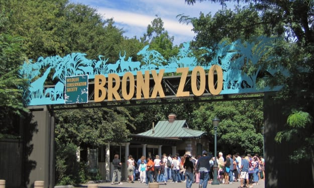 Looking for a Zoo Destination This Summer? Visit the Bronx Zoo!!