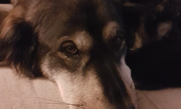 How I Saved a Dog from an Abusive Owner