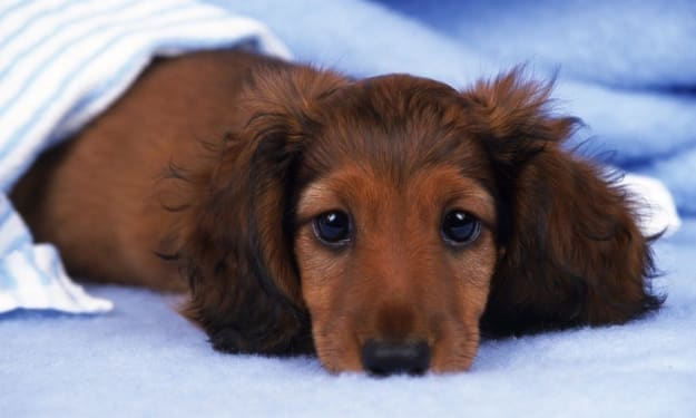 Top Small Dogs for Apartment Living