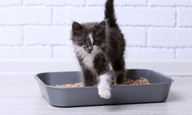 How To Make Your Own DIY Cat Litter