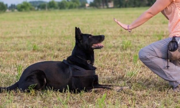 BLUEISLAND Dog Training Collar