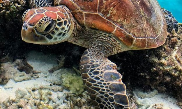 6 Differences Between Turtles and Tortoises