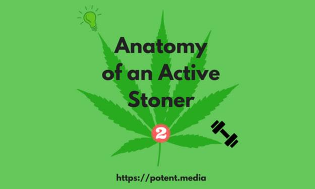 Anatomy of an Active Stoner 2