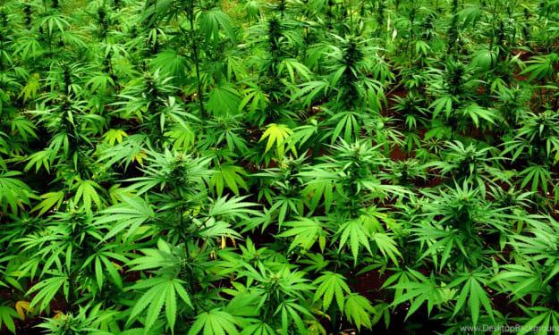 Positive Effects of Marijuana