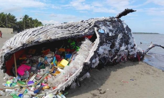 Why Plastic Straws Harm the Planet and Eco-Friendly Straw Alternatives
