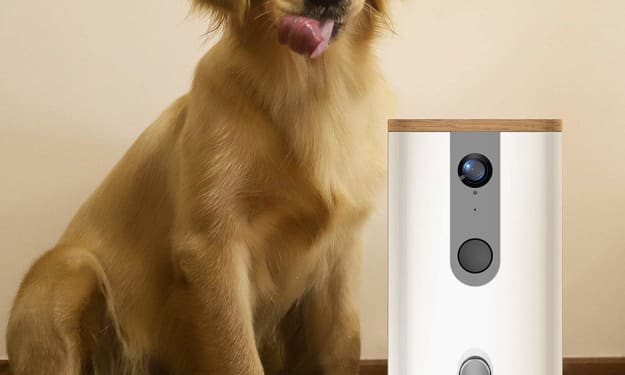 Play with Your Pet When You Aren't Home with Dogness Pet Camera & Treat Dispenser