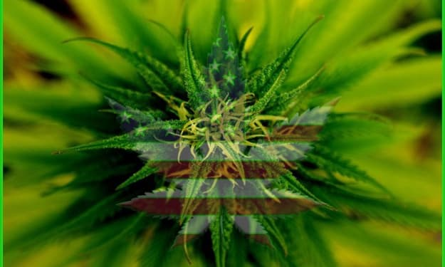 The History of Marijuana in the United States