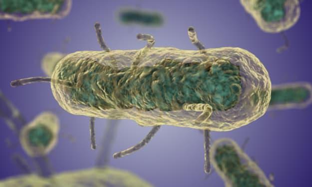 How Disease Shapes Human History