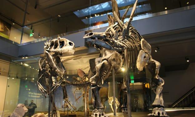 The Dead Zoo: Stegosaurus