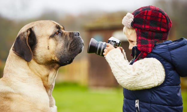 Tips for Photographing Your Pets to Get a Perfect Photo