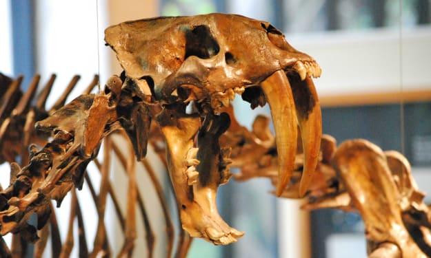 The Dead Zoo: Smilodon