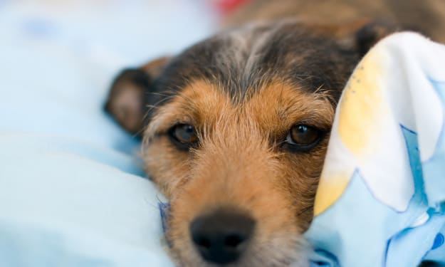More Hospitals Allowing Pet Visits for Patients