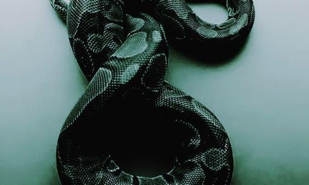 Head Snakes