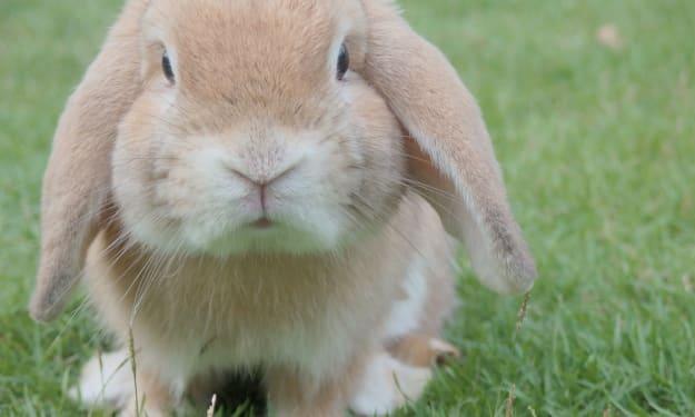 My Very First Rabbit
