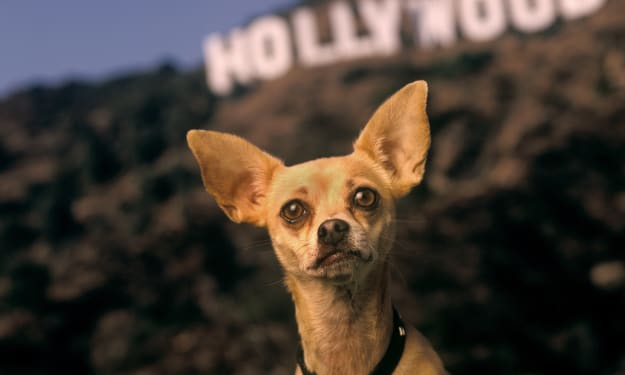 10 Most Famous Animal Actors in History