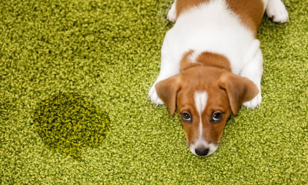 Best Pet Stain Removers