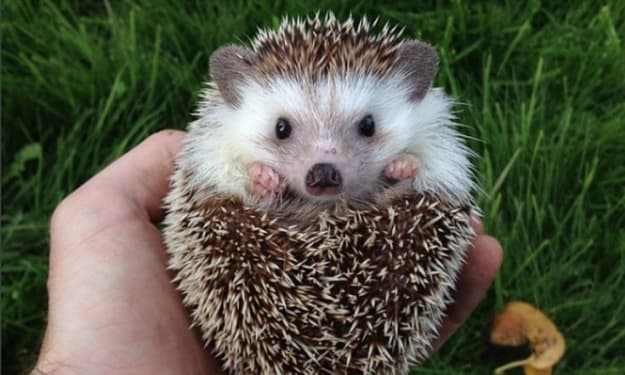12 of the Cutest, Most Unique Animals