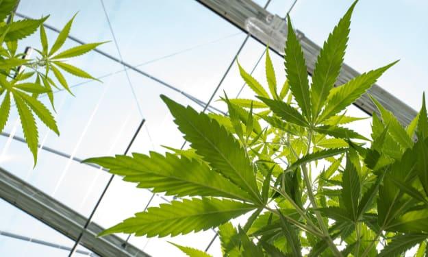 Pros and Cons of Marijuana Legalization