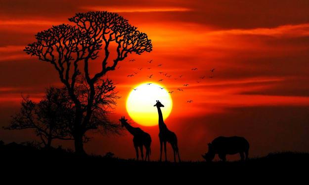 Best Advice for Planning a Safari Honeymoon