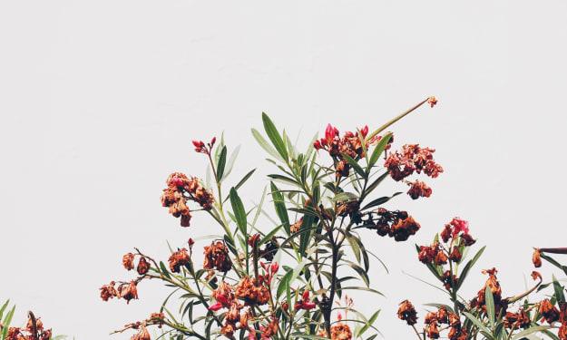 Cultivating a Garden in Candide and Huck Finn