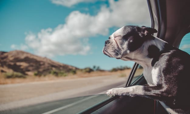Best Accessories for Traveling with Your Dog