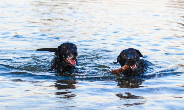 Dogs and Water