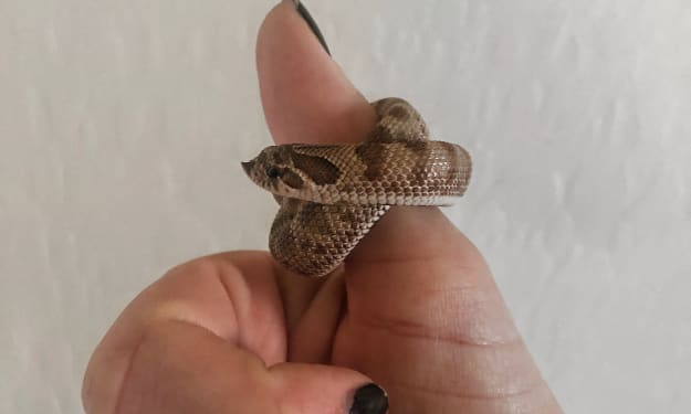 What It's Like Owning a Pet Snake