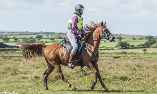 Endurance Riding–Allaskar's Scout